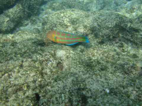 coloful fish in Kona