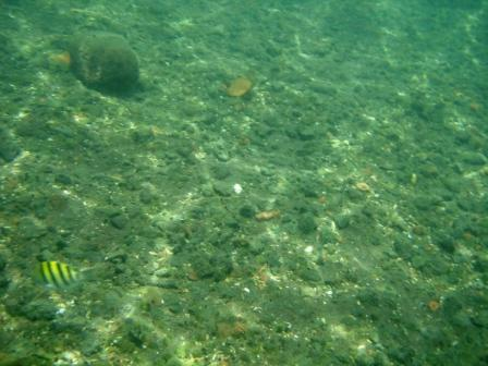 puna hot springs fish