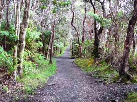 Path to Thurston tube in Volcano National Park