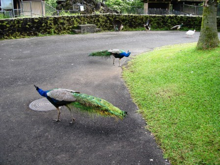 Zoo in Hilo